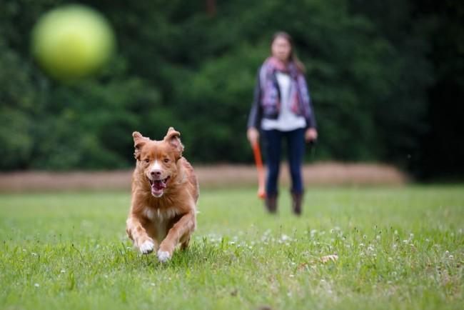 zapalanzar-pelota-perro-2