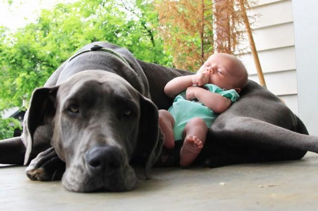 zapaohh-que-cosita-perro-grande-con-una-nena-chiquita-960x700
