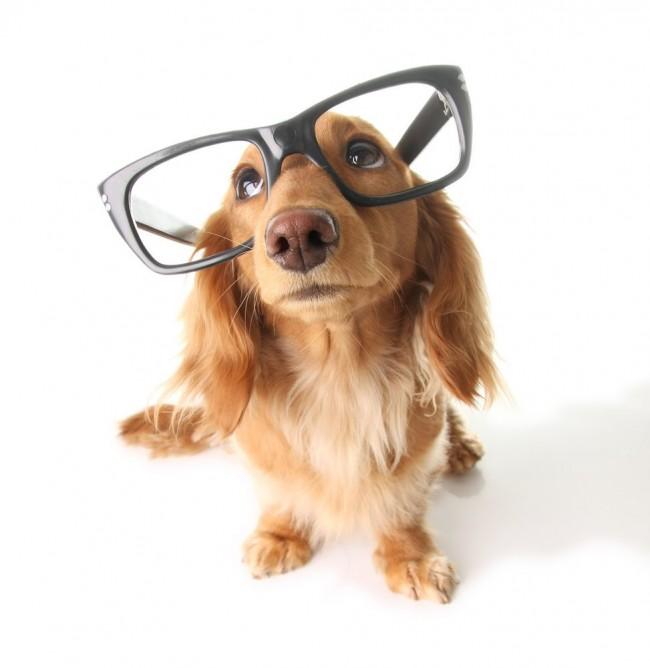 zapashutterstock_27405649-perro-inteligente