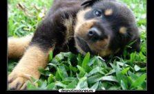 Hermosas Imágenes Para Descargar De Perros En El Día
