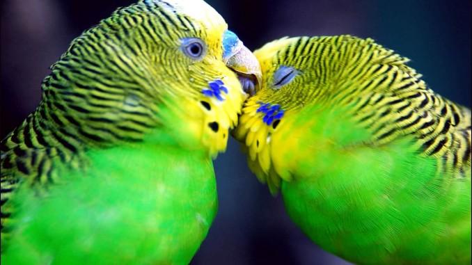 Amor-y-relaciones-de-pareja-entre-animales-3