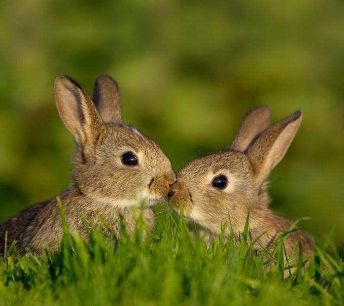 Amor-y-relaciones-de-pareja-entre-animales-5