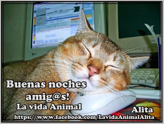 Buenas noches amig@s!
