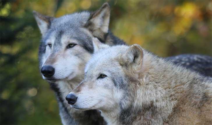 Hermosas imágenes para descargar gratis de animales en pareja