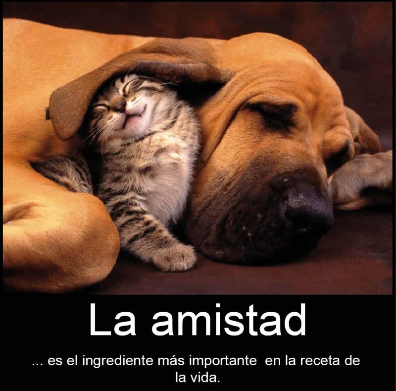 Frases-de-amistad-con-animales-6