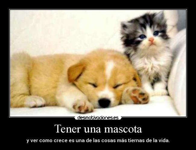 Imagenes-Chistosas-De-Animales-Con-Frases-Para-Facebook-4