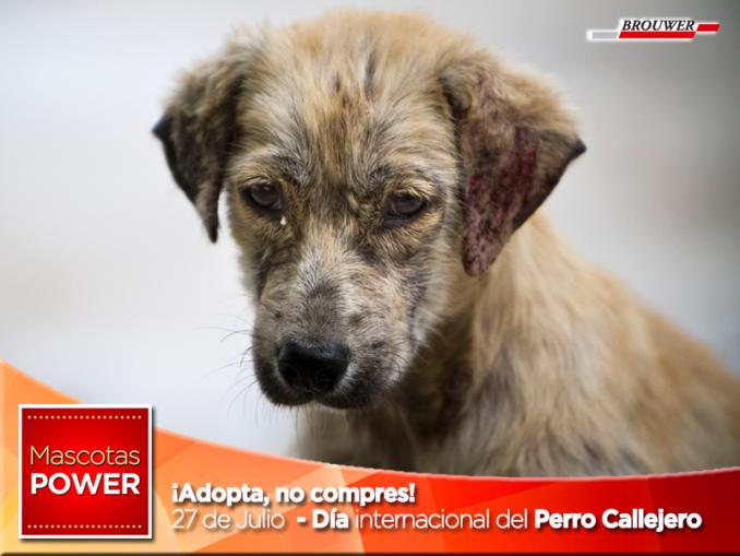 adopta-no-compres_dia-internacional-del-perro-callejero_27-de-julio_mascotaspower_powerultra-pipetas-brouwer