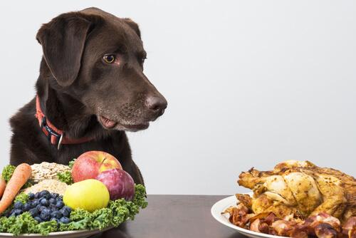 alimentación-perros