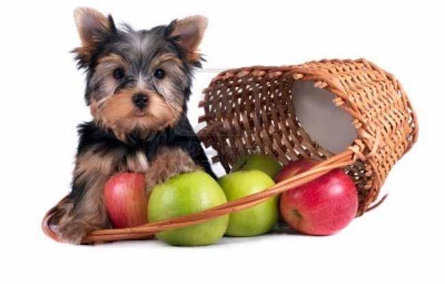 alimentacion-del-perro