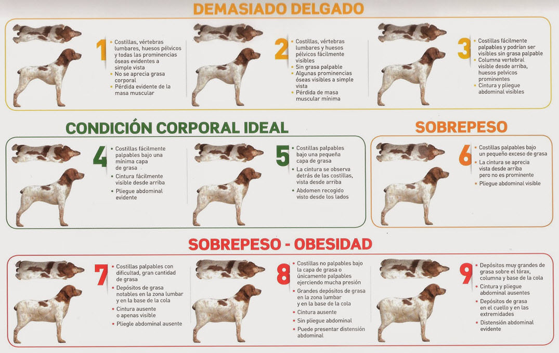 alimentacion-perro-infografia