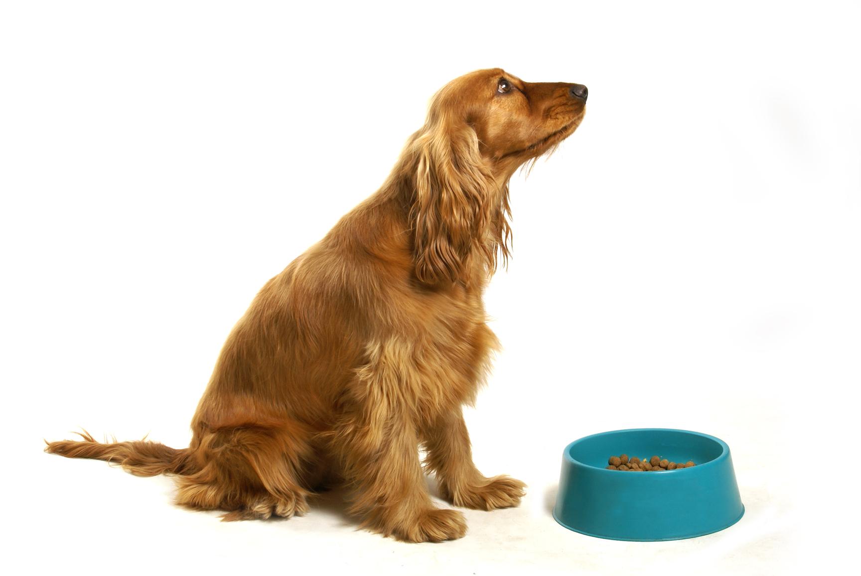Alimentos para perros aptos y prohibidos recetas caseras para perros - Comida para cachorros de un mes ...