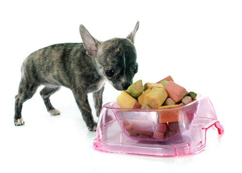 alimentacioncomida-y-perro