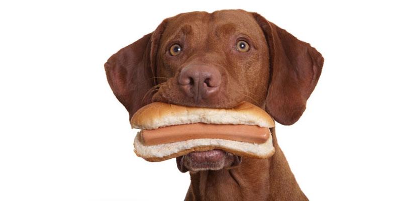alimentacioncuanto-cuando-comer-perro