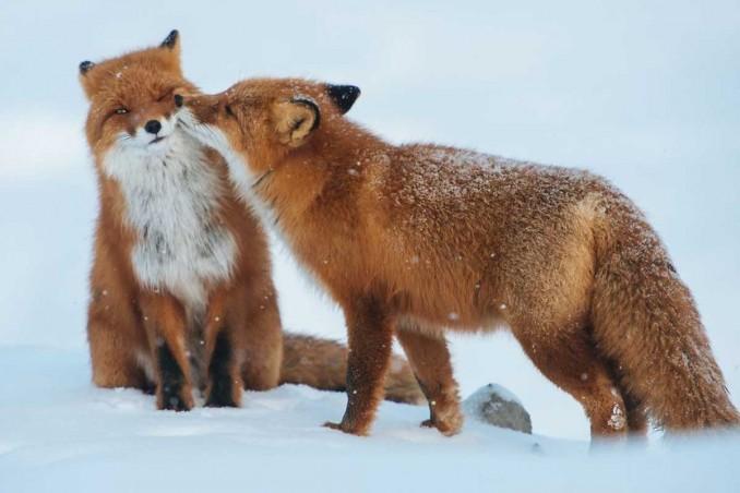 animals-love-couple-10__880-1