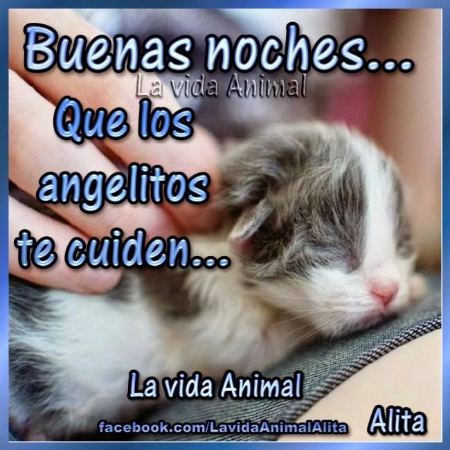 buenas noches gatito