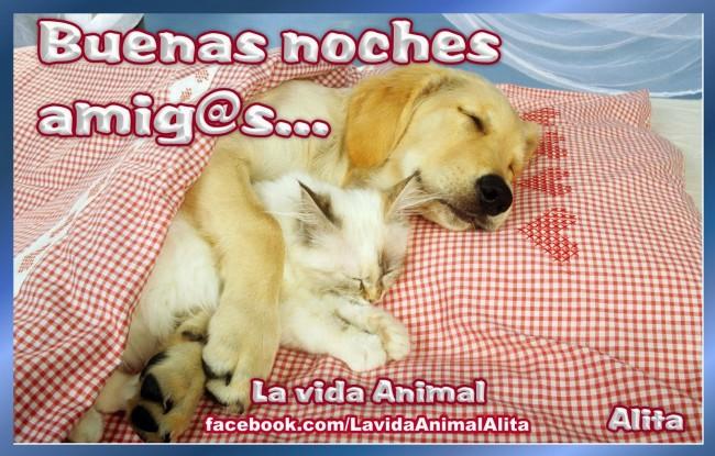 buenas noches perro gato