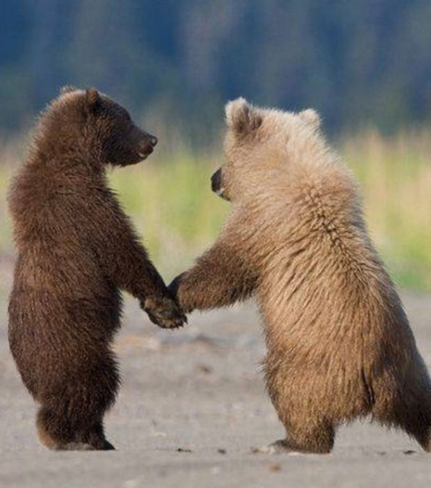 el-amor-en-pareja-ilustrado-por-los-animales-cuando-coges-su-mano-por-primera-vez_6873_w620