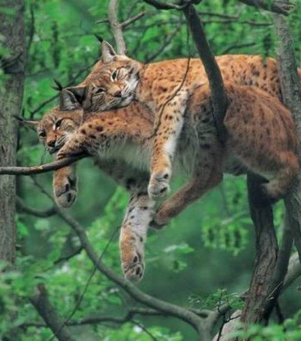 el-amor-en-pareja-ilustrado-por-los-animales-cuando-se-duerme-en-vustro-brazo_6883_w620