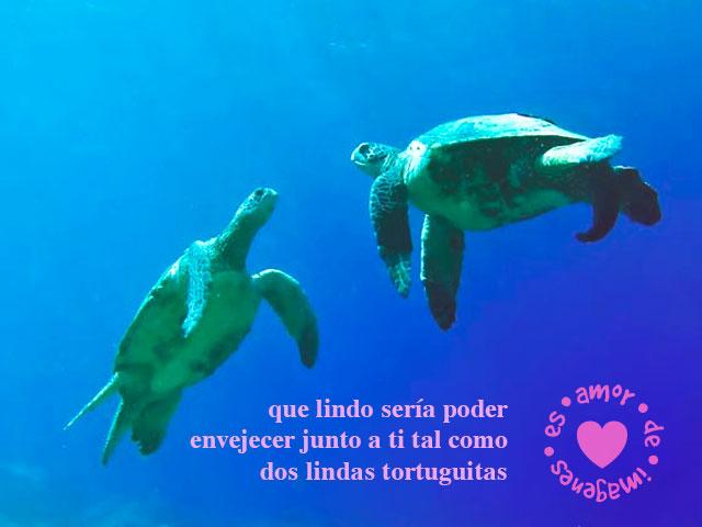 frases-de-amor-con-tortuguitas-bajo-el-agua