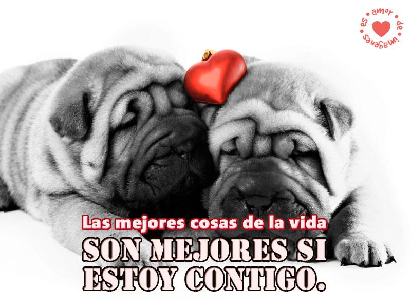 imagen-de-tiernos-perritos-de-amor-perritos-graciosos-y-tiernos-con-frases-de-amor-para-dedicar