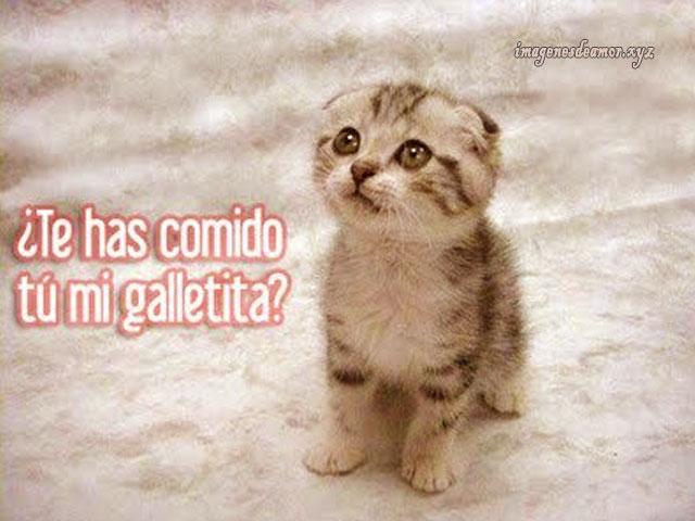 imagenes-de-gatitos-tiernos-con-frases-de-amor5