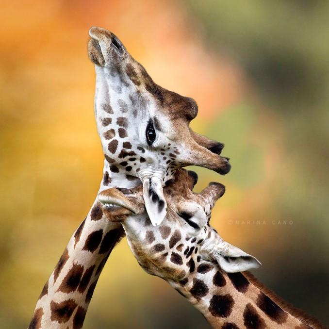 parejas-animales-enamorados-1