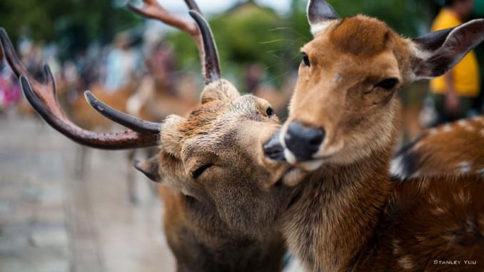 parejas-animales-enamorados-6