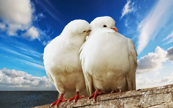 terapia de pareja amor entre animales