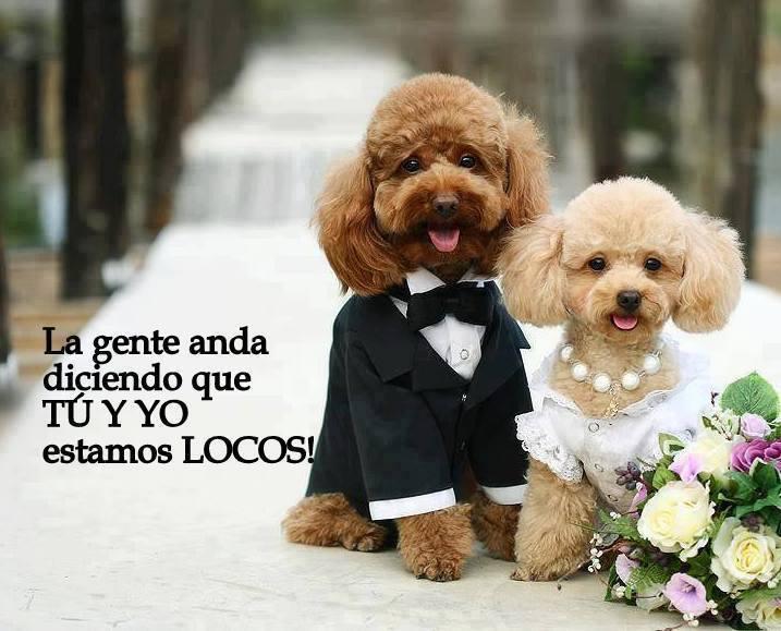Imagenes De Perros Con Frases Cortas De Amor Para Descargar Gratis