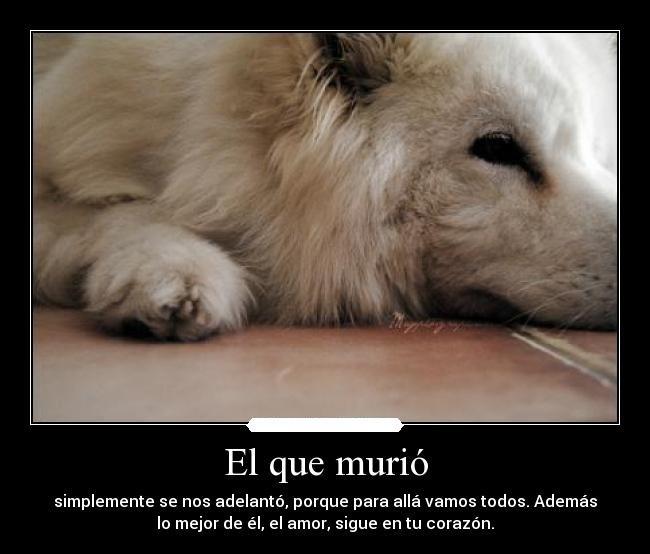 Frasesamor Frases De Amor Para Perros Cortas