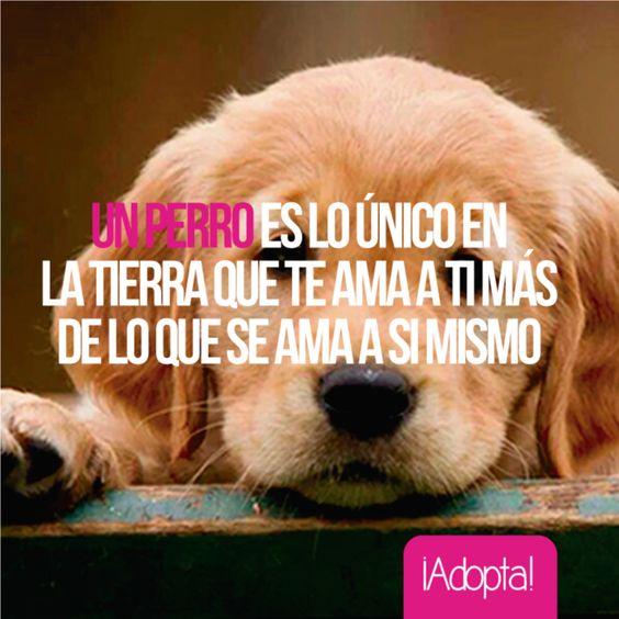 Imágenes De Perros Con Frases Cortas De Amor Para Descargar