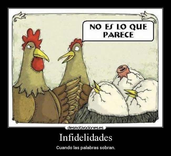 Iimagenes-chistosas-de-infidelidad-entre-aves