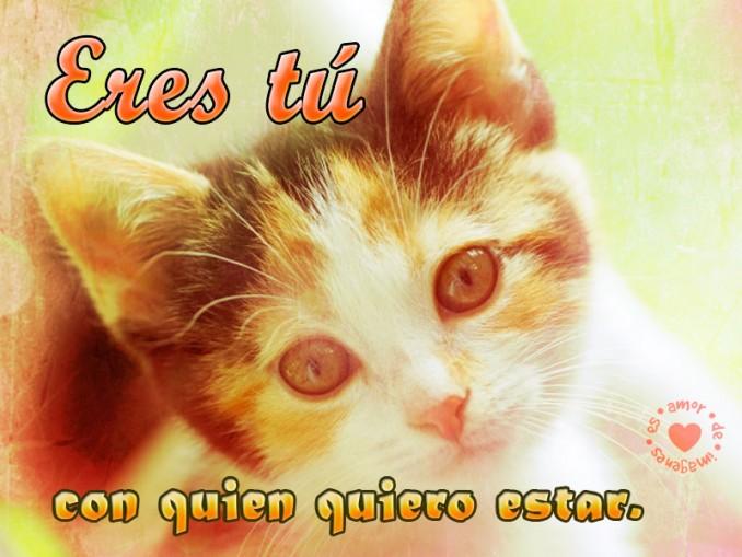 Imagenes Para Descargar Gratis De Gatitos Con Frases Tiernas Para