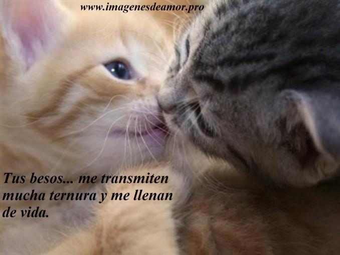 beso-gatos