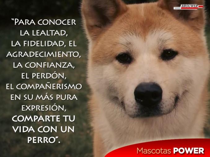 comparte-tu-vida-con-un-perro-frase-perros-gatos-mascotaspower-pipetas-powerultra-laboratorios-brouwer