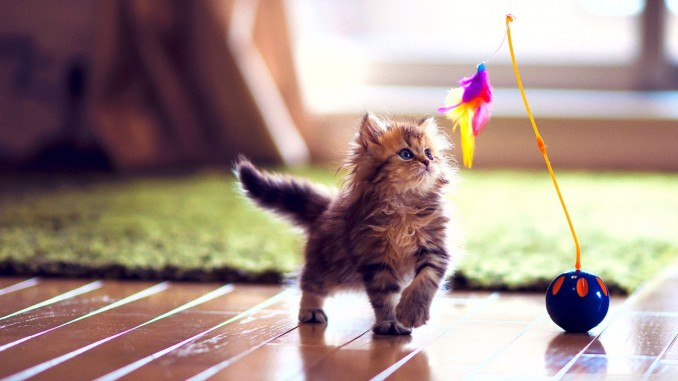 cute_kitten_playing-wallpaper-1280x720