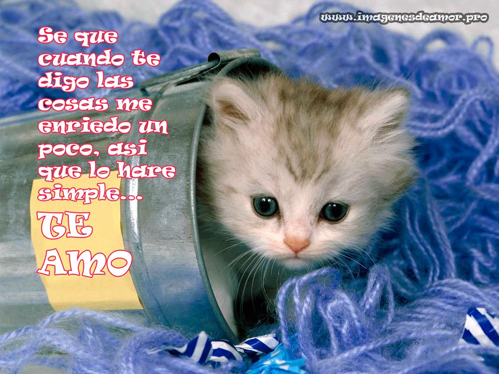 Imagenes Para Facebook Para Descargar: Imágenes Para Descargar Gratis De Gatitos Con Frases