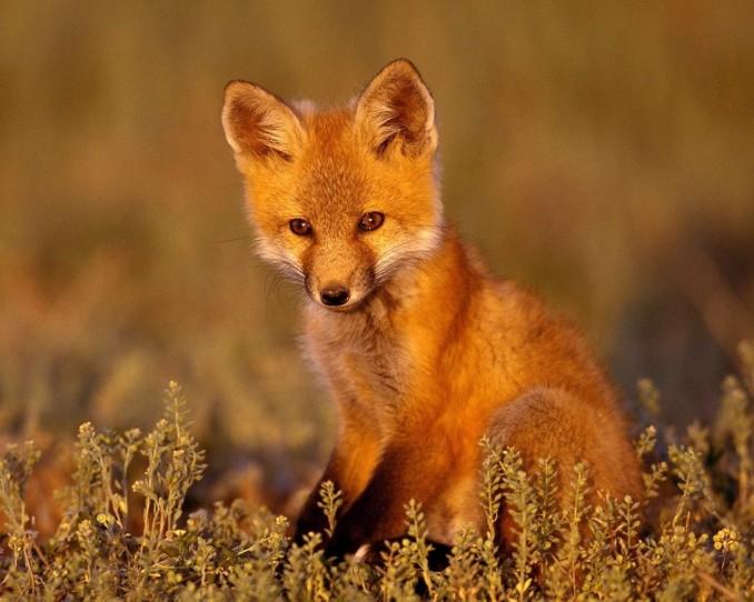 Fondos De Animales Animados: Hermosas Imágenes En HD De Fondos De Pantallas De