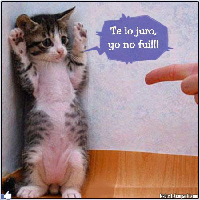 gatito-acusado