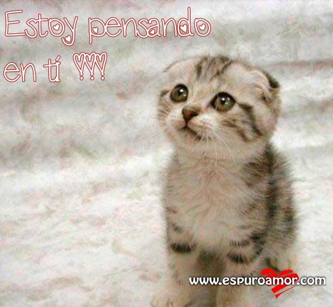 gatito-bonito-pensando-extra-C3-B1ando-estoy-pensando-en-ti