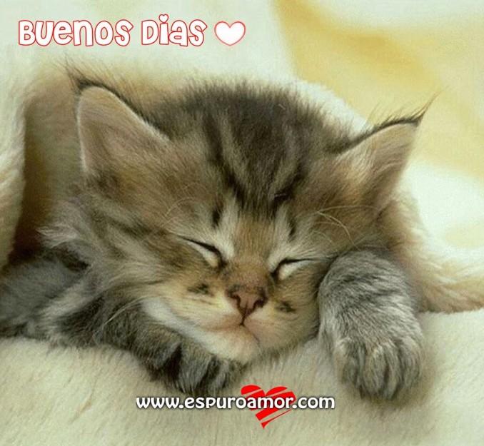 gatito-despertando-buenos-dias1