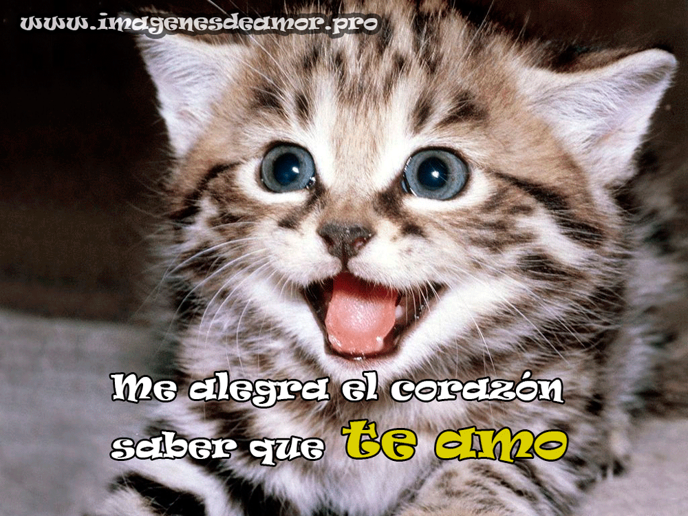 gatito-sonriente