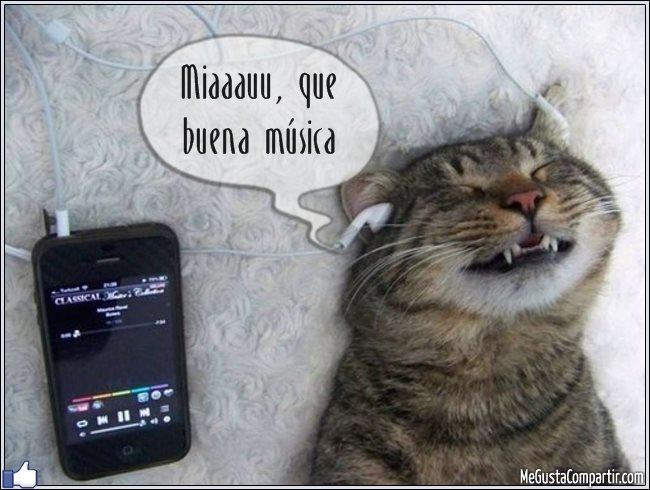 gato-musica