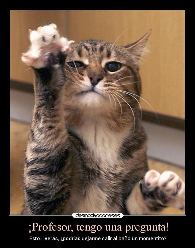 imágenes-graciosas-de-gatos-enojados