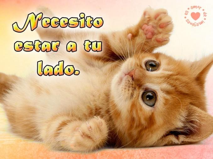 imagen-de-amor-con-frase-de-gato-frases-de-amor-para-los-amantes-de-los-gatos