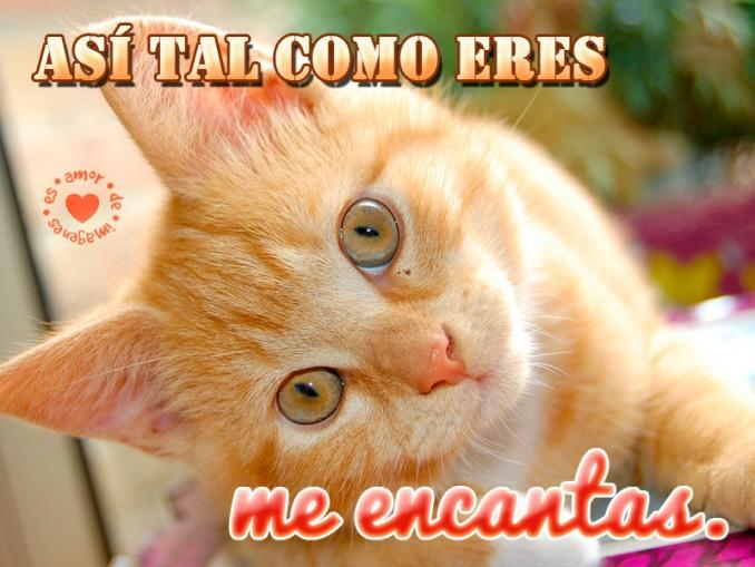 Imágenes para descargar gratis de gatitos con frases