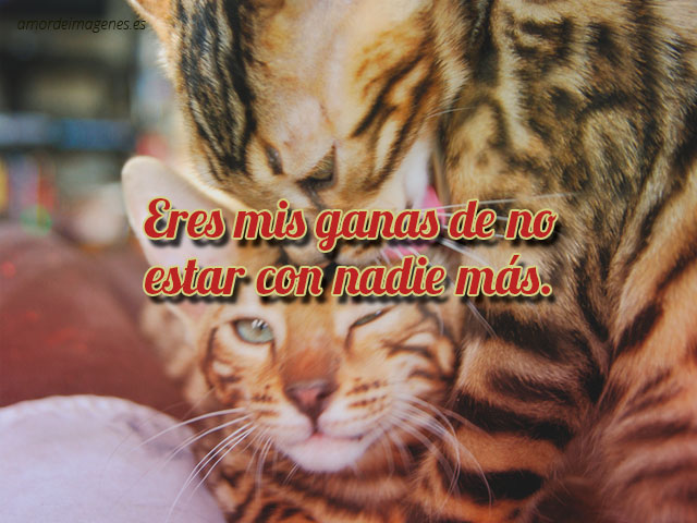imagen-gatitos-carinosos