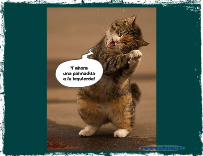 imagenes-chistosas-de-gatitos