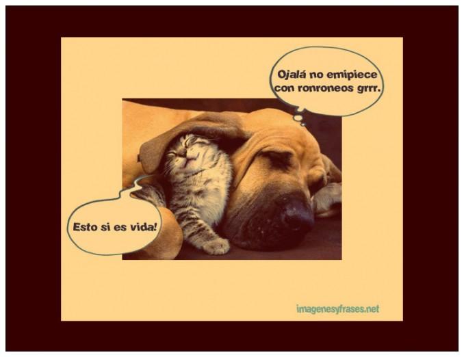 imagenes-chistosas-gato-durmiendo-con-el-perro
