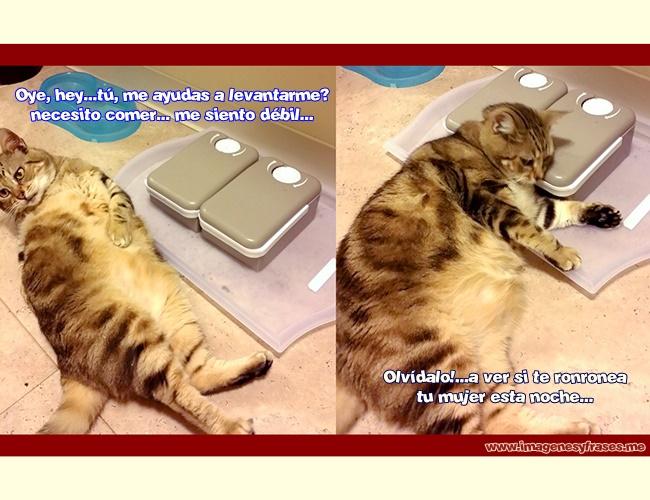 imagenes-chistosas-gato-gordo